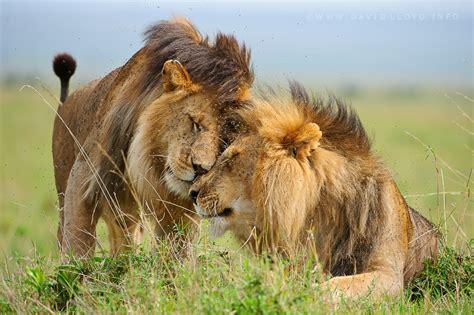 beautiful dangerous wild animals pets  africa beautiful