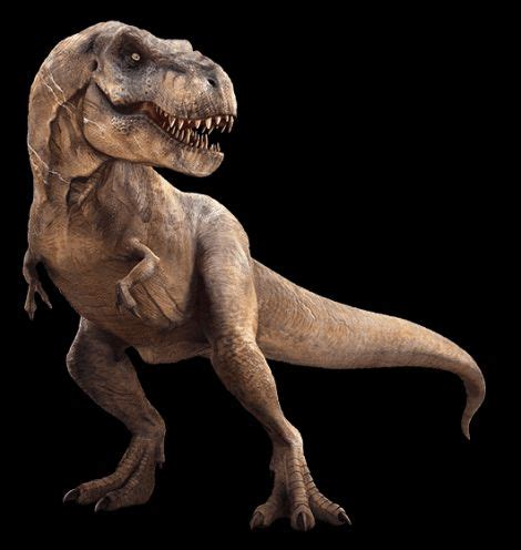 The Deadliest Dinosaurs Meet The Dinosaurs best 25 dinosaur pictures ideas on dinosaurs dinosaur decorations and pictures of