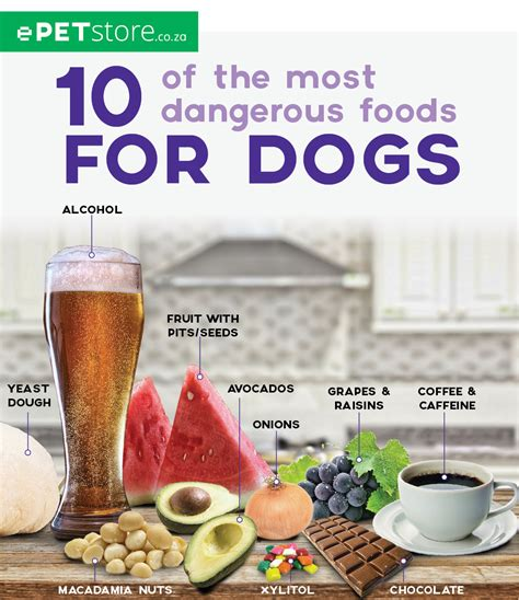 dangerous foods for dogs 10 of the most dangerous foods for dogs epetstore south africa
