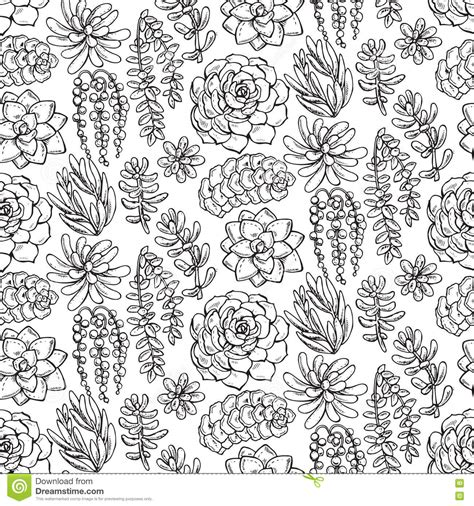 seamless pattern by hand vector seamless pattern with hand drawn succulent plants