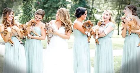 bridesmaids puppies has bridesmaids carry rescue puppies instead of bouquets