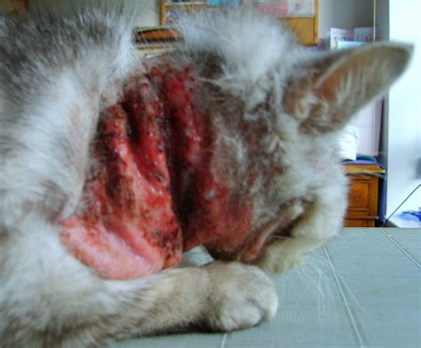 bleeding from cat aid