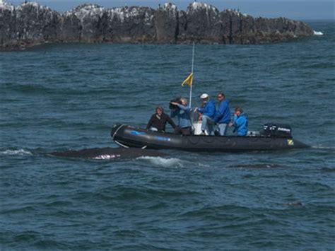 zodiac workboat zodiac milpro wb inflatable boat workboat www