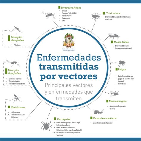 imagenes de vectores transmisores de enfermedades prevenga las enfermedades transmitidas por vectores