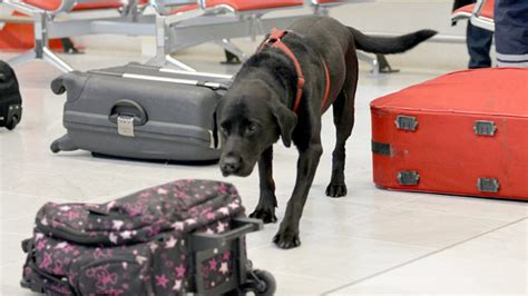 bomb sniffing dogs u s grant for pbia bomb sniffing dogs cut by nearly 800 000