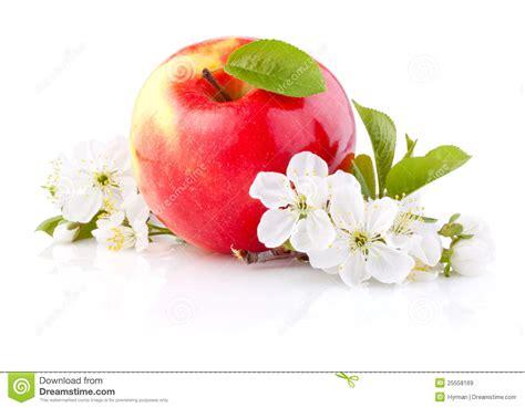 imagenes de flores solas solas manzanas rojas con la hoja y las flores im 225 genes de