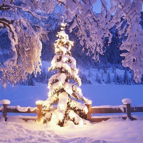 fantastic christmas trees mini hd wallpaper