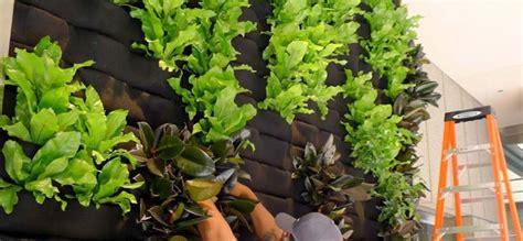 imagenes de jardines verticales caseros c 243 mo hacer jardines verticales caseros