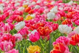 images of flowers flower backgrounds 18205 1280x853 px hdwallsource