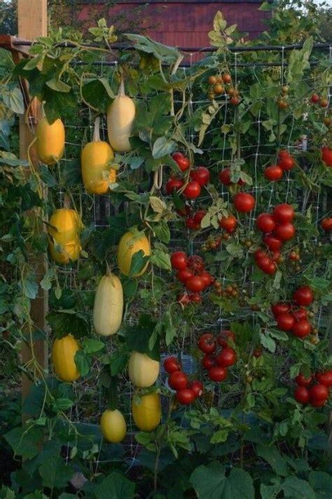 vertical gardening techniques for maximum returns