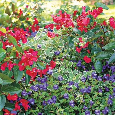111 best images about shade loving plants on pinterest gardens shade plants and the shade