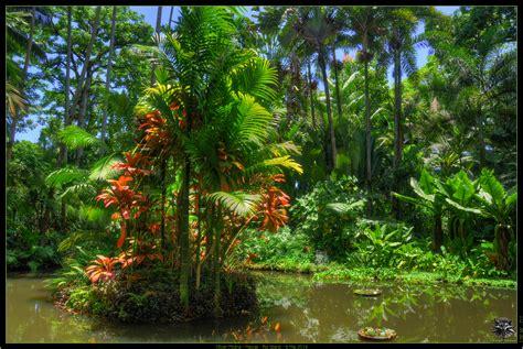 Hawaii Tropical Botanical Gardens Hawaii Tropical Botanical Garden Picture Ref 9100