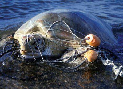gravy boat o que significa la basura es una grave amenaza para las tortugas marinas