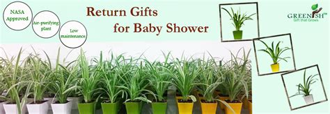 Return Gifts For Baby Shower by Greenish Gift That Grows Baby Shower Return Gifts