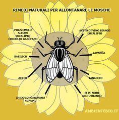 come combattere le formiche in giardino rimedi naturali contro gli scarafaggi rimedi naturali e