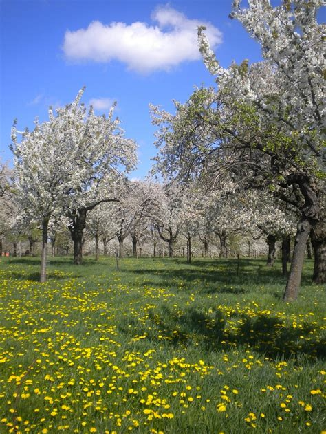 h fruit belgium 17 best images about region hesbaye haspengouw on