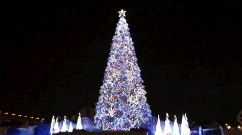 world s best christmas tree listed in the guiness book of