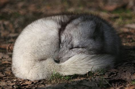 most adorable animals the world s most adorable animals and where to find them