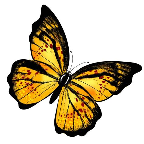 24 best yellow butterfly meaning images on 260 best draw something repeat images on