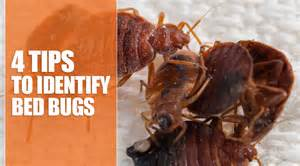 4 ways to kill bed bugs sheepy churches