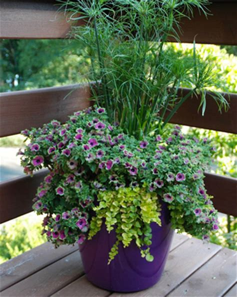 Patio Gardening Tips Container Gardening Tips