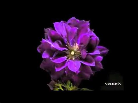 imagenes mas bellas del mundo las flores mas hermosas del mundo youtube
