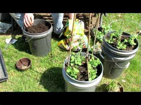 The Rusted Vegetable Garden 5 Gallon Vegetable Garden