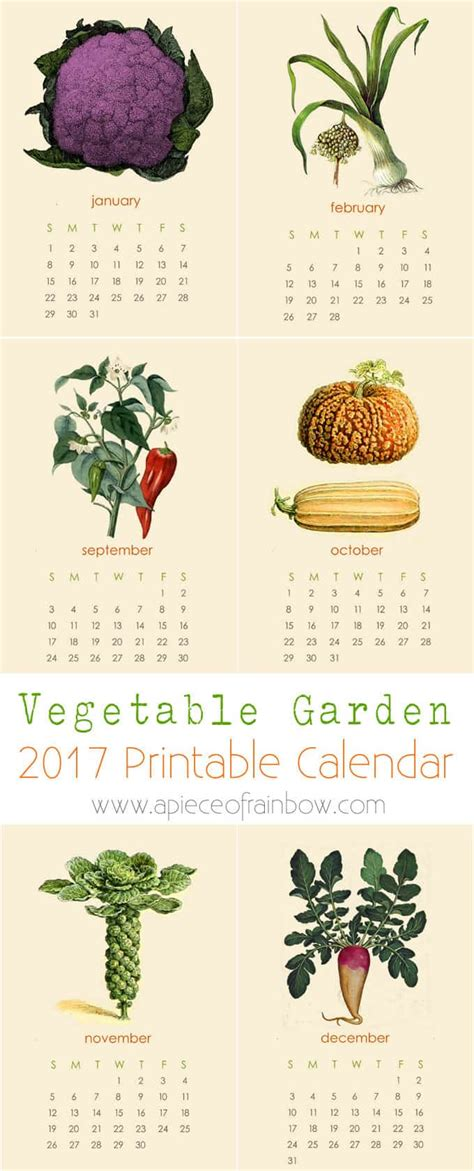 free 2017 vegetable garden calendar a of rainbow