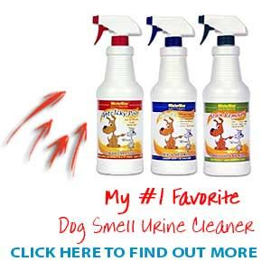 house smells of dog urine strong smelling urine causes of smelly urine in dogs
