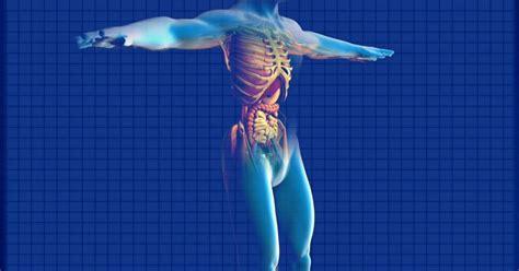 interior del cuerpo humano organos cuerpo humano y sus rganos cuerpo humano t