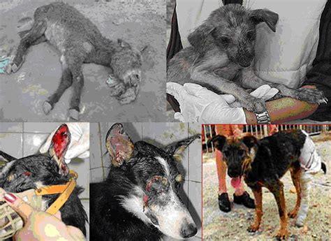 imagenes de animales maltratados maltrato animal es hora de reflexionar taringa