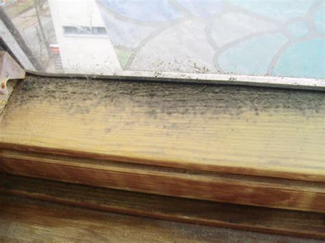 fliesen schimmel entfernen schimmel im entfernen wie entsteht schimmel in der