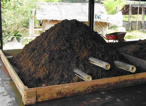 Pupuk Kandang Sapi Untuk Kelapa Sawit 9 manfaat pupuk kompos yang perlu anda ketahui