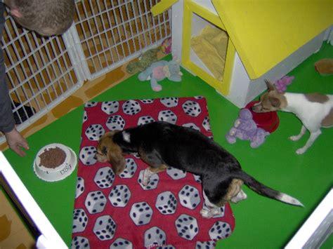 puppy town las vegas las vegas boarding day care grooming