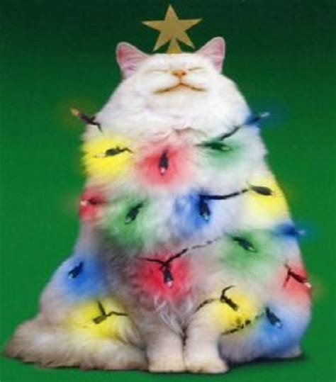Top 10 Up Lights - top 10 cats helping to put up the lights