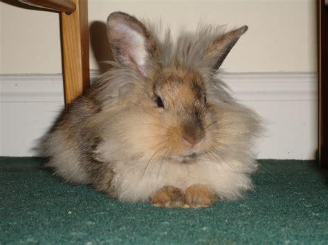 Pet Rabbit Breeds   www.imgkid.com   The Image Kid Has It!