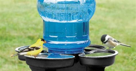 water cooler for birds with a roof bird water cooler our versatile bird waterer can be hung from a shepherd s hook mounted on a