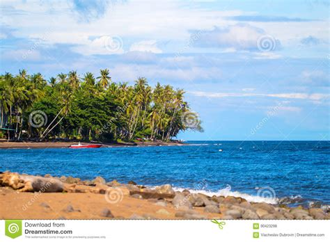 beautiful hawaiian shrub plants trinity by the sea tropical landscape with coco palm trees and sea beautiful