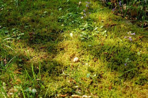 Alles Ber Schnecken 3126 by Pflanzen Gegen Schnecken Gartenversand Richard Ward