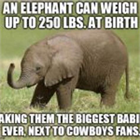 Baby Elephant Meme - baby elephant meme generator imgflip