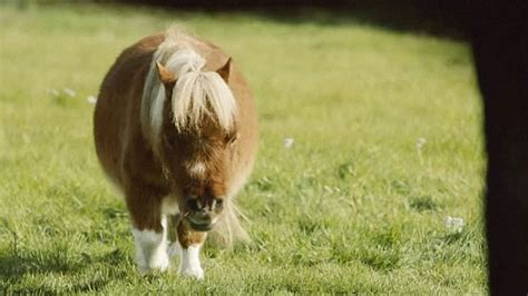 amazon prime commercial actress little man this tiny lonely pony tugs the heartstrings in amazon