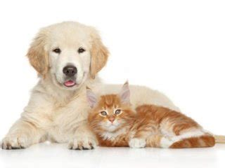 vendita alimenti per animali articoli e negozio per animali caltanissetta