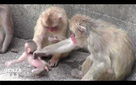 baby animal video youtube