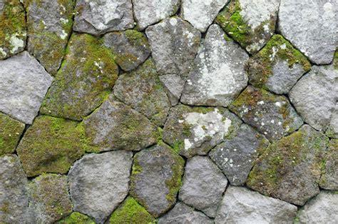 algen auf terrassenplatten flechten auf terrassenplatten entfernen flechten