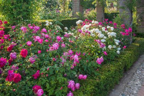 pin  hgtvgardens  garden rose garden design garden