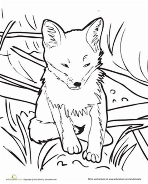 coloring page baby fox baby fox coloring page education com