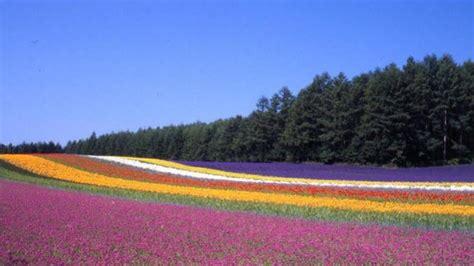 giappone in fiore giappone incantato coi ciliegi in fiore