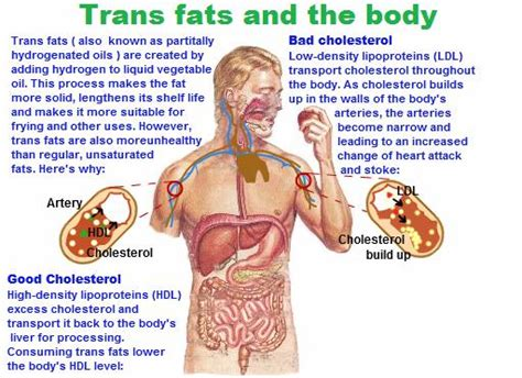 healthy fats what do they do we really are what we eat southton chiropractors at