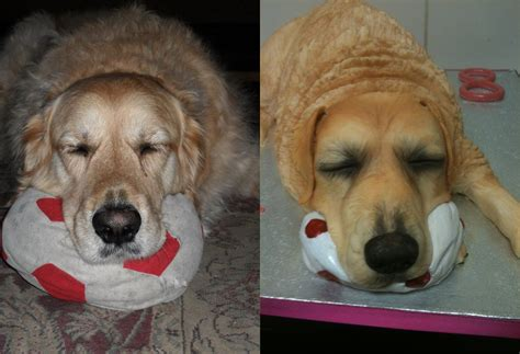 golden retriever cake golden retriever cake cakecentral