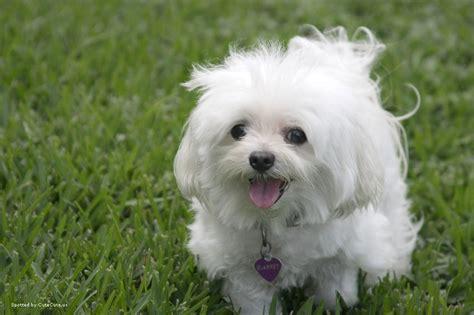 Puppy Comforter Social Media Miss Bec